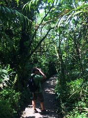 """La Réserve de Monteverde: tous à vos jumelles ! <a style=""""margin-left:10px; font-size:0.8em;"""" href=""""http://www.flickr.com/photos/127723101@N04/26945304105/"""" target=""""_blank"""">@flickr</a>"""