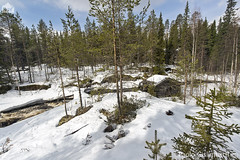 Casotto nel bosco, hut in the forest (paolo.gislimberti) Tags: wood trees snow alberi forest finland landscapes neve wilderness paesaggi thaw conifers torrent finlandia bosco foresta undergrowth torrente woodenhouses sottobosco conifere disgelo casedilegno runningwaters primaverafinlandese finnishspring acquecorrenti