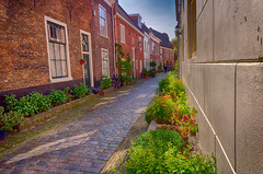 Old Houses With Shiny Windows (Alfred Grupstra Photography) Tags: street houses plants haarlem wall nederland nl noordholland