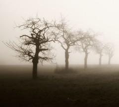 (Cocoa.) Tags: trees arbres mist fog