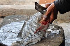 Tongging - Removing Fishscales (Drriss & Marrionn) Tags: travel fish nature sumatra indonesia landscape rainforest southeastasia jungle tilapia tropics laketoba volcaniclake tongging