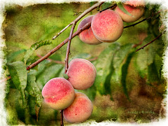 Summer peaches (sandra.harris10) Tags: tatot magicunicornverybest