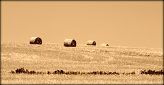 sepia hay (WITHIN the FRAME Photography(5 Million views tha) Tags: skyline sepia farming harvest rolls hay bales
