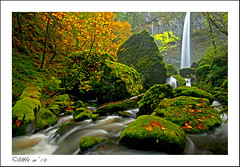 The Land of Milk and Honey (little m:)) Tags: please vote columbiarivergorge finalist littlem elowahfalls fallcolorcontest waterfallwednesday apertureacademy