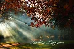 I've returned! (imeldalaura) Tags: autumn waterford dungarvan colliganwood carrickcameraclubmember