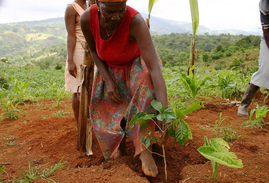 Femmes - Plantation d'un pied de cafe