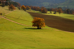 GREN SLOPES (SWITZERLAND  LIESEBERG) (KAROLOS TRIVIZAS) Tags: autumn green switzerland village soil land fields dust slope cultivation ploughing foliages digitalcameraclub lieseberg bestcapturesaoi blinkagain bestofblinkwinners