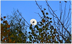 Autumn With Sweet Moon (Behzad No) Tags: moon tree fall alone iran hide shiraz seek fars nikond90 behzadno