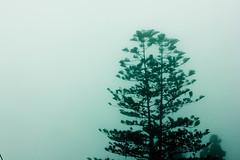 The Fog (Sourodeep) Tags: love ngc kolkata calcutta natgeo 550d sourodeep