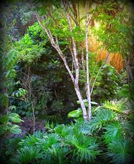 ~~WaimeaBotanicalGarden#9~~ (TravelsThruTheUniverse) Tags: tropicalplants exoticgardens oahuhawaii tropicalgardens tropicalfoliage subtropicalgardens waimeavalleybotanicalgarden tropicallandscapes subtropicallandscapes flickrstruereflection1 bbng waimeavalleyoahu waimeaparkhaleiwaoahu