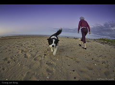Coming & Going (Sean Savery Photography) Tags: dog pet pets cute beach pentax fisheye tasmania cuteness smc k5 ulverstone buttonsbeach pentaxda1017mmf3545ediffisheyezoom seansaveryphotography