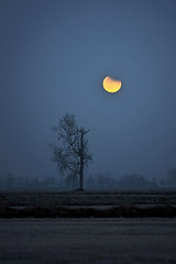 Lonely moon (ste.it) Tags: moon tree silhouette luna albero alberoefoglia 70200vrii