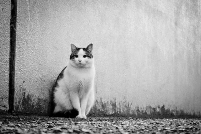 Today's Cat@2011-12-19