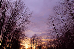 Sunset through winter trees 2 (K D Photos) Tags: pink trees winter sunset nature december colours bc purple portcoquitlam