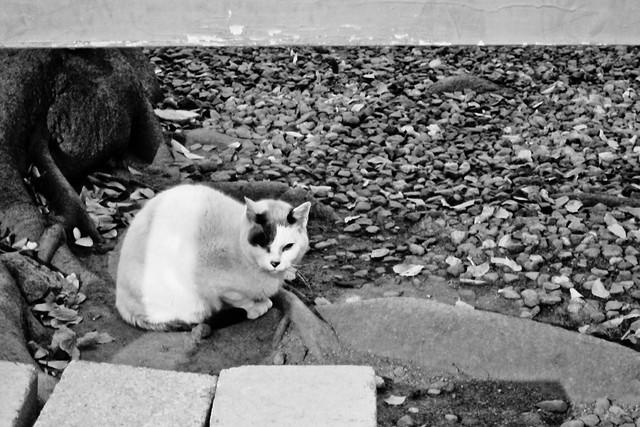 Today's Cat@2011-12-21