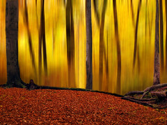 Batikart's Forest (Batikart) Tags: autumn orange brown black blur color colour tree green art fall nature leaves yellow forest canon germany season landscape geotagged carpet deutschland buchenwald leaf moss flora colorful europa europe pattern pov earth patterns herbst jahreszeit natur x foliage gelb trunk colourful grn blatt effect landschaft wald bltter 500faves baum beech moos g11 buche stamm badenwrttemberg bole baumstamm swabian 2011 100faves 50faves 200faves weinstadt aichwald strmpfelbach viewonblack 300faves superaplus 400faves 600faves batikart 700faves 201201 canonpowershotg11 gettygermanyq4
