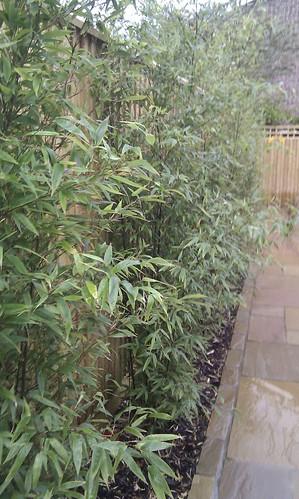 Hardwood Decking Alderley Edge - Modern Family Garden. Image 18