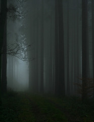 into the unknown (timo.kosenko) Tags: morning travel trees light mist nature fog forest canon germany dark lost woods mood shadows darkness spooky trail wald hochtaunus