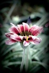 media noche en el jardín (istar-famiredo) Tags: flower macro flor soraya antonio canon500d atven