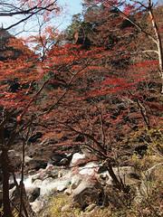 PB243738 (karst) Tags: autumn japan walk autumncolors e30 yamanashi 2011 shosenkyo autumnwalk 1122mmf2835