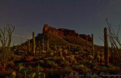 Arizona  by moonlight (Arizphotodude) Tags: longexposure arizona cactus stars landscape interestingness glow dusk az tokina moonlight saguaro 2012 ariz d7k d7000 tokina1116 nikond7000