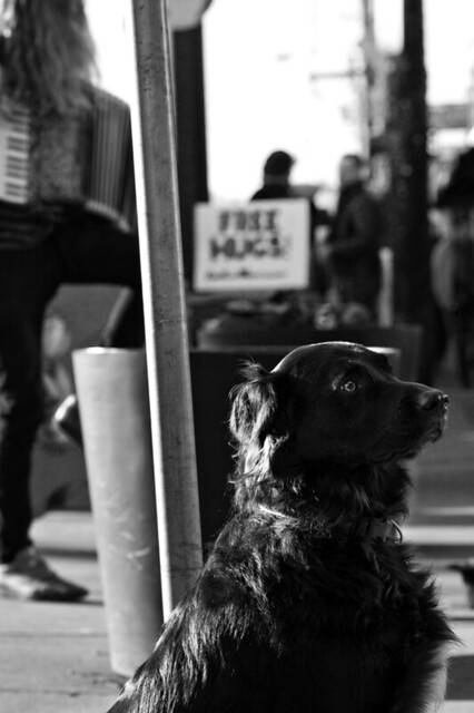 8988.2 Black Dog B&W