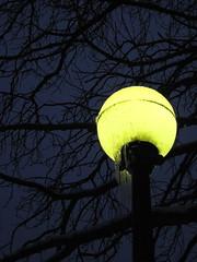 Deep freeze (Miss Q Pix) Tags: seattle streetlight icicles