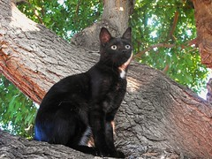 Calli in the Tree (Callisto_Star) Tags: pet cats animal cat kitty kittens kitties