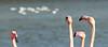 COLLS I BECS - CUELLOS Y PICOS (beagle34) Tags: francia 74 reservaafricana sigean françe sijan roselló flamencs blinkagain llenguedoc