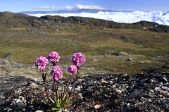 "Sommer am Eisfjord, Ilulissat, Westgrönland • <a style=""font-size:0.8em;"" href=""http://www.flickr.com/photos/73418017@N07/6747932767/"" target=""_blank"">View on Flickr</a>"