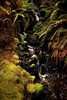 Brookfalls (Little Lioness) Tags: trees tree green nature strange fog oregon forest canon woods northwest foggy haunted spooky explore story naturepark darkforest onexplore hauntedwoods darkwoods hauntedforest deadwoods mistywoods foginforest photofaceoffwinner photofaceoff darkjungle pfogold girlinwoods forestatnight photocontesttnc08 cooksbuttepark nakedinwoods picturesoffoggyforest spookydarkforest darkforestwoods shadowyforest