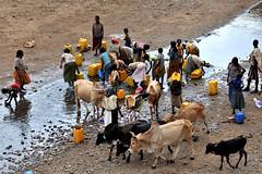 Water (rafal ziejewski) Tags: culture peoples tradition ethnic ethnology nomadic ethiopie etiopía etiopija ethnie ethiopië 埃塞俄比亚 etiopien etiópia 埃塞俄比亞 etiyopya אתיופיה эфиопия 에티오피아 이디오피아 種族 етиопија 衣索匹亚 衣索匹亞 ziejewski