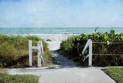 Land's End (whispaws) Tags: ocean sea beach gulfofmexico island sand florida walk horizon utata sanibel whispaws utata:project=tw301 tw301