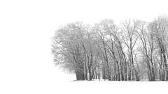 Snow Graphic