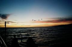 the tyranny of petty things (oceanerin) Tags: leica sunset birds kodak santamonica portra m6 elmarit roll59
