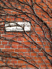 Hidden Street (Rutger Blom) Tags: plant sign facade sweden growing malm malmo canonpowershots100 5226mm tgmstaregatan