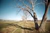 , (Benedetta Falugi) Tags: trees winter tree green film analog 22mm eximus benedettafalugi wwwbenedettafalugicom