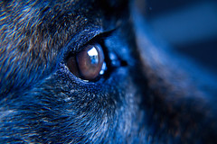 Blick (Jansi :)) Tags: dog pet macro eye up animal closeup sad close hund auge marko tier jeko portrai traurig
