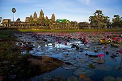 Angkor (Jon Asay 찰칵) Tags: stars temple dawn pond cambodia lotus buddhism angkor wat