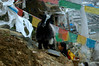 goat on the steep kora (cam17) Tags: tibet prayerflags shigatse tashilhunpomonastery tashilhunpo tibetangirl shigatsetibet curiousgoat tibetangoat tashilhunpokora blackwhitegoat