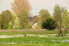 view with a stork (JoannaRB2009) Tags: flowers trees house building green bird nature landscape countryside spring view meadow poland polska stork lodzkie dzkie