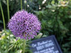 Allen Centennial Gardens (ibm4381) Tags: uw campus madison canonef1635mmf28liiusm