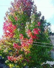 Tree in autumn (crisfin12) Tags: autumn tree nature naturally