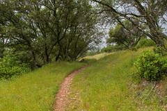 RHM_1661-1392.jpg (RHMImages) Tags: california panorama landscape us nikon unitedstates auburn trail foresthill d810