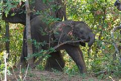 Suedafrika-31 (Lukas P Schmidt) Tags: elephant nationalpark krugerpark