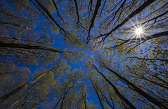 Nothing but blue sky (jeffgauld) Tags: sky sun ontario sunshine outdoors collingwood bluesky explore