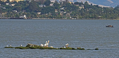 A Lazy Day on the Bay (charlottes flowers) Tags: water birds view benicia carquinezstrait