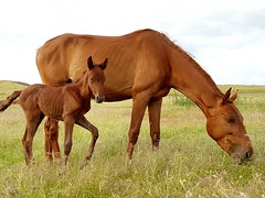 Horses (thedarkness741) Tags: horses horse naturaleza primavera nature animal animals forest landscape caballo caballos photography countryside photo spring photographer may pic bosque campo mayo animales photooftheday picoftheday fotografa fotodeldia