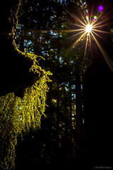 Moss Curtain (jetcitygrom) Tags: mountain forest moss woods angle curtain 28mm wide translucent gr rattlesnake ricoh sunstar