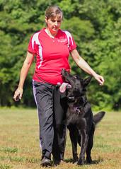 2016-05-22, IPO Training-7 (Falon167) Tags: dog shepherd rhonda german miles gsd germanshepherddog